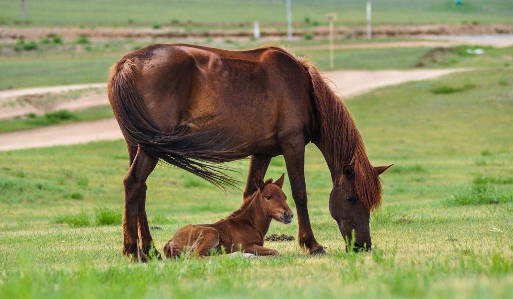 konie w zagrodzie