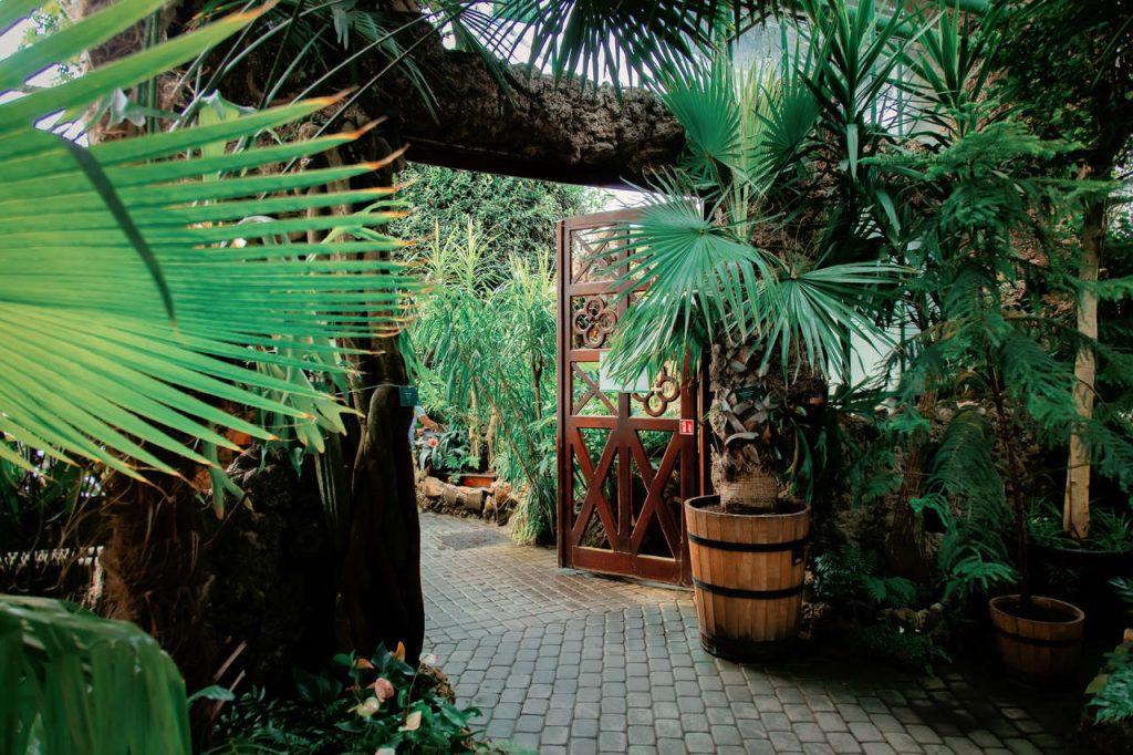 palmy w oranżerii