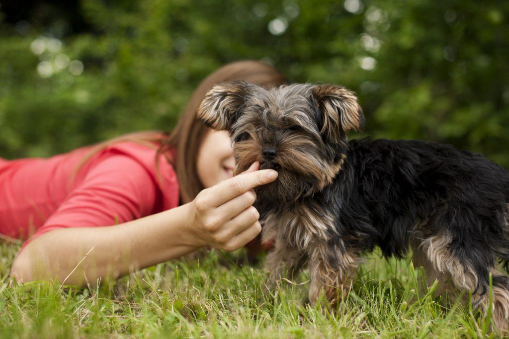 dziewczynka karmiąca psa